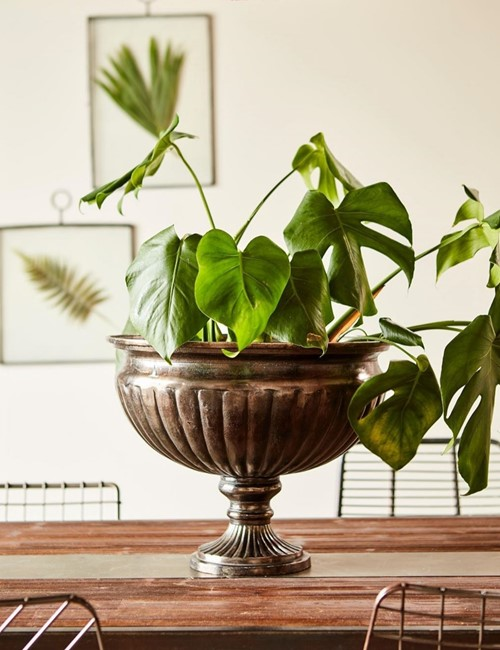 CARTER Iron Casted Plant Pot